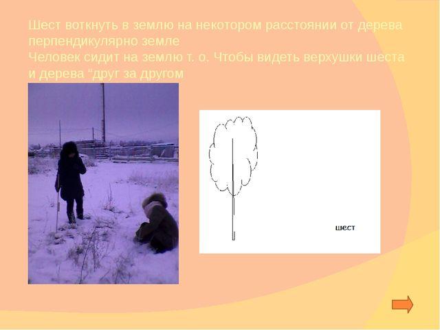 2 способ: Измерение высоты дерева с равнобедренного треугольника исследовател...