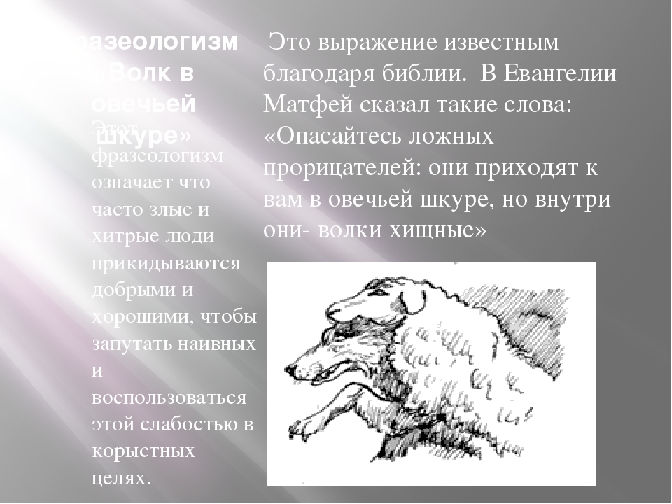 Фразеологизм «Волк в овечьей шкуре» Этот фразеологизм означает что часто злые...
