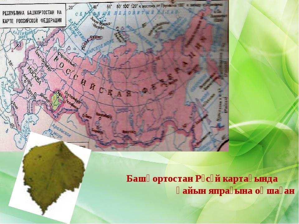 Башҡортостан Рәсәй картаһында ҡайын япрағына оҡшаған
