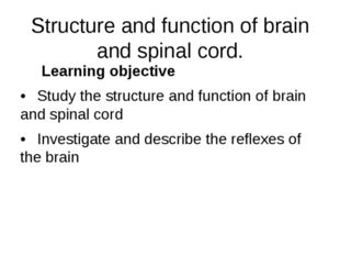 Structure and function of brain and spinal cord. Learning objective •Study t