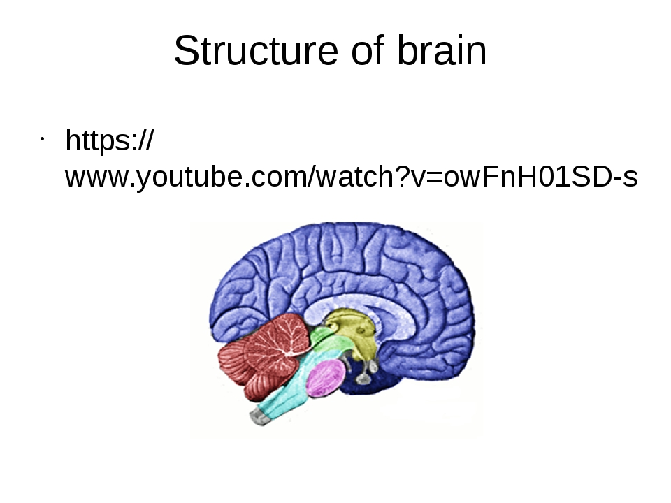 Structure of brain https://www.youtube.com/watch?v=owFnH01SD-s