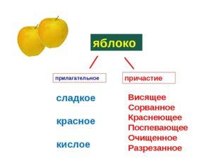 ⁄ яблоко сладкое красное кислое большое круглое ⁄ прилагательное причастие Ви