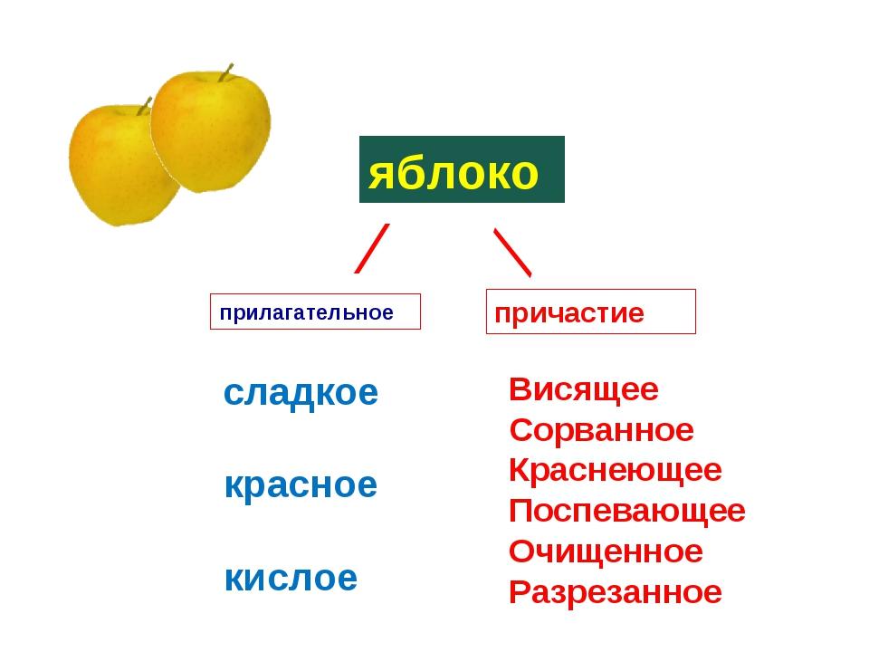 ⁄ яблоко сладкое красное кислое большое круглое ⁄ прилагательное причастие Ви...