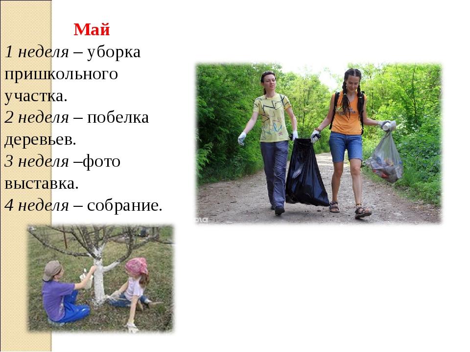 Май 1 неделя – уборка пришкольного участка. 2 неделя – побелка деревьев. 3 не...