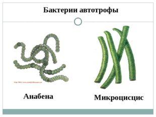 Бактерии автотрофы Анабена Микроцисцис