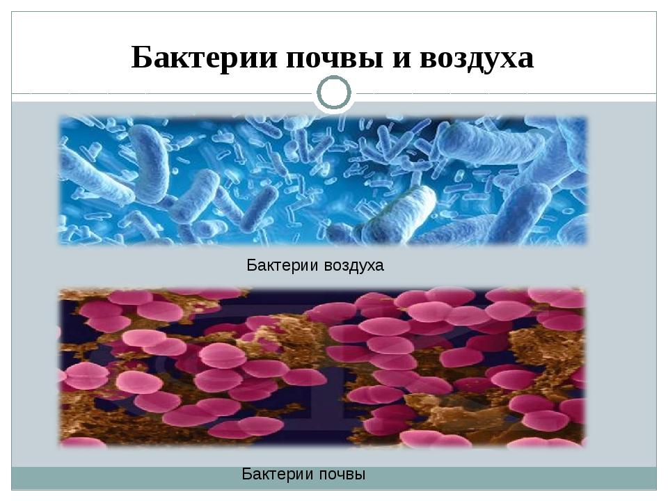 Бактерии почвы и воздуха Бактерии воздуха Бактерии почвы