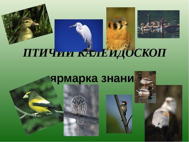 ПТИЧИЙ КАЛЕЙДОСКОП ярмарка знаний