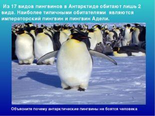 Из 17 видов пингвинов в Антарктиде обитают лишь 2 вида. Наиболее типичными о
