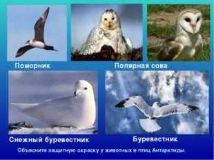Снежный буревестник Поморник Буревестник Объясните защитную окраску у животн