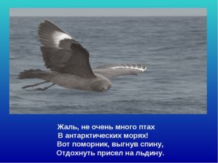 Жаль, не очень много птах В антарктических морях! Вот поморник, выгнув спин