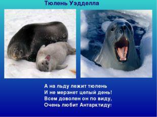 А на льду лежит тюлень И не мерзнет целый день! Всем доволен он по виду, Оч