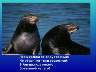 Лев морской по виду грозный! Но обманчив - вид серьезный: В Антарктиде нико
