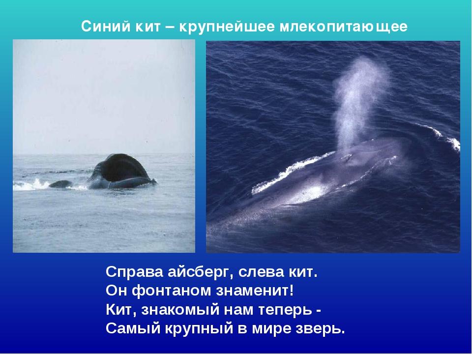 Справа айсберг, слева кит. Он фонтаном знаменит! Кит, знакомый нам теперь -...