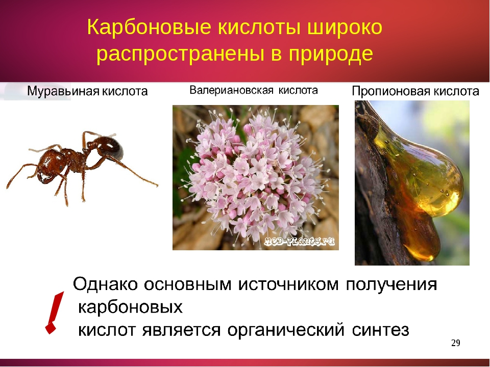 * Карбоновые кислоты широко распространены в природе !