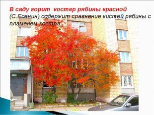 В саду горит костер рябины красной (С.Есенин) содержит сравнение кистей рябин