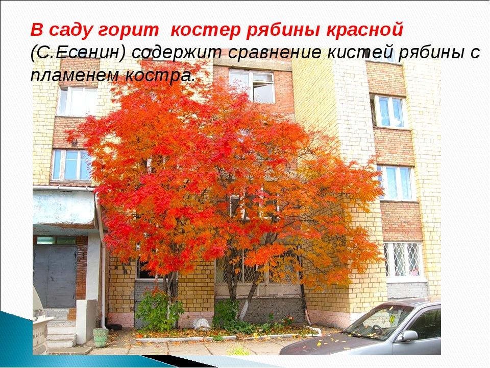 В саду горит костер рябины красной (С.Есенин) содержит сравнение кистей рябин...