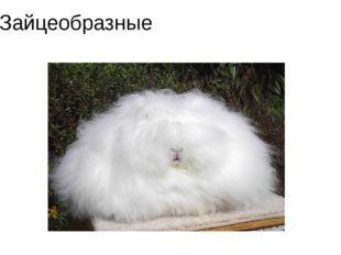Зайцеобразные