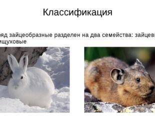 Классификация Отряд зайцеобразные разделен на два семейства: зайцевые и пищух
