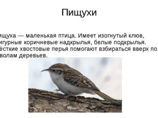 Пищухи Пищуха— маленькая птица. Имеет изогнутый клюв, фигурные коричневые на