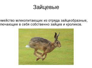 Зайцевые Семейство млекопитающих из отряда зайцеобразные, включающее в себя с