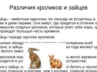 Различия кроликов и зайцев Зайцы – животные-одиночки. Их никогда не встретишь