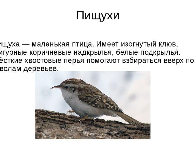 Пищухи Пищуха— маленькая птица. Имеет изогнутый клюв, фигурные коричневые на...