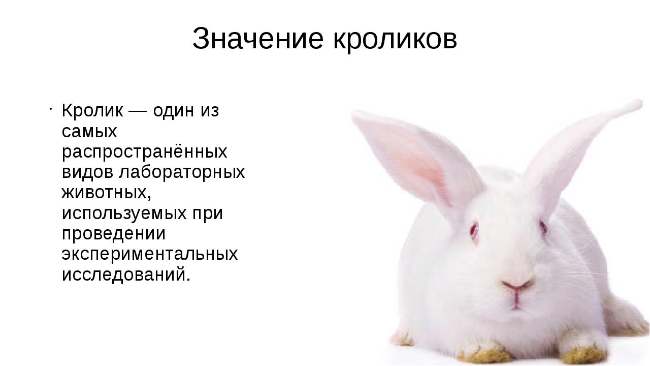 Значение кроликов Кролик— один из самых распространённых видов лабораторных...