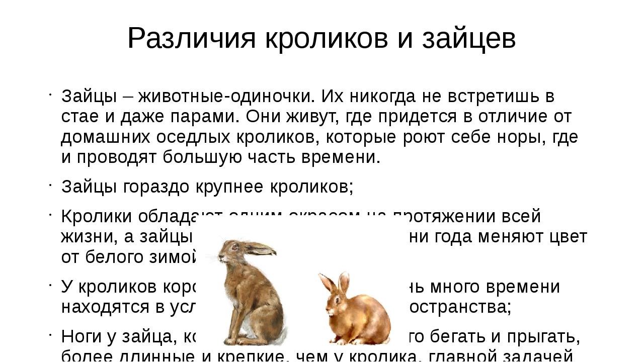 Различия кроликов и зайцев Зайцы – животные-одиночки. Их никогда не встретишь...
