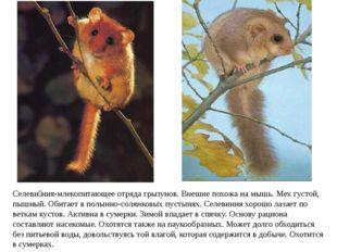 Селеви́ния-млекопитающееотряда грызунов. Внешне похожа намышь. Мех густой,
