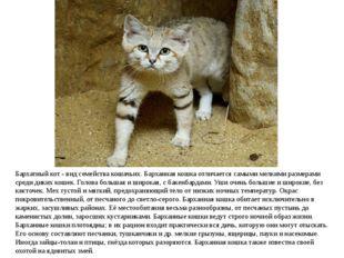 Бархатный кот - вид семействакошачьих. Барханная кошка отличается самыми мел