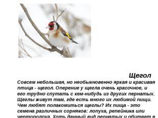 Щегол Совсем небольшая, но необыкновенно яркая и красивая птица - щегол. Опе