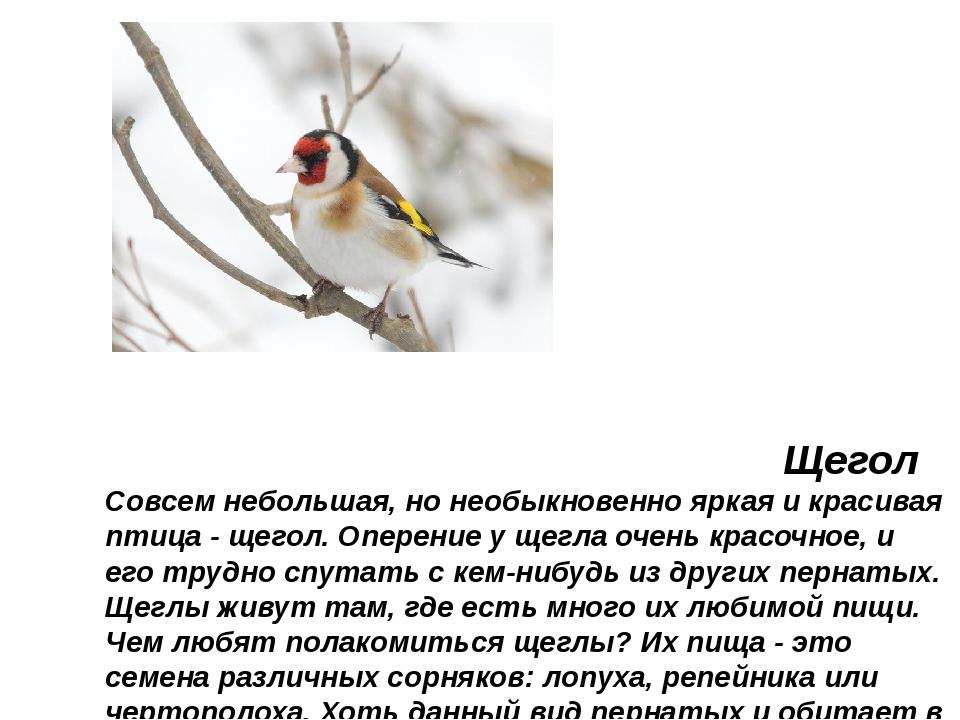 Щегол Совсем небольшая, но необыкновенно яркая и красивая птица - щегол. Опе...