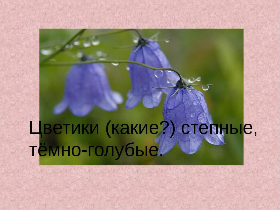 Цветики (какие?) степные, тёмно-голубые.