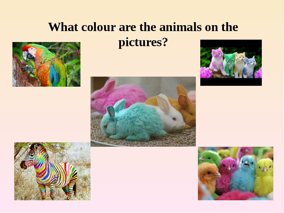 What colour are the animals on the pictures?