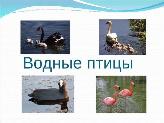 Водные птицы