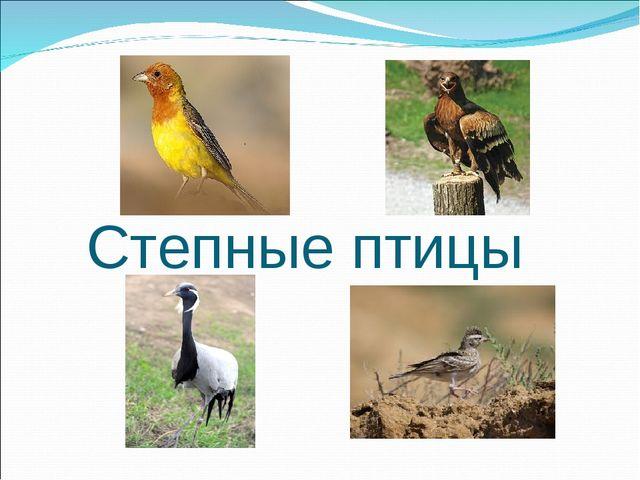 Степные птицы