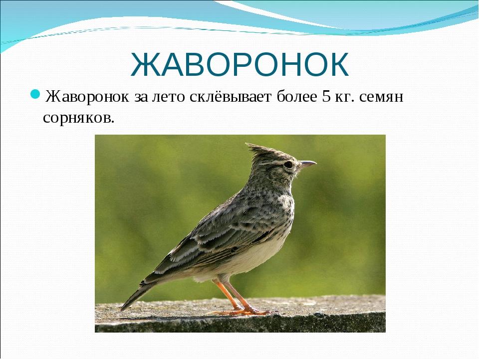 ЖАВОРОНОК Жаворонок за лето склёвывает более 5 кг. семян сорняков.