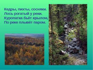 Кедры, пихты, сосняки. Лось рогатый у реки. Куропатка бьёт крылом, По реке пл