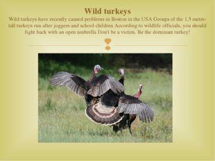 Wild turkeys Wild turkeys have recently caused problems in Boston in the USA