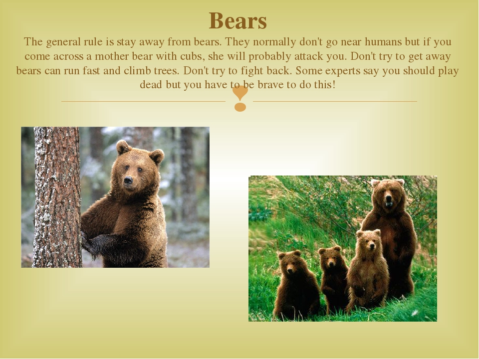 Bears The general rule is stay away from bears. They normally don't go near h...