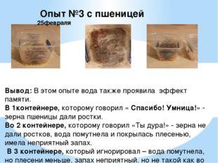 Опыт №3 с пшеницей 25февраля Вывод: В этом опыте вода также проявила эффект
