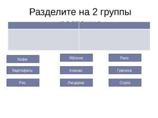Разделите на 2 группы растения Кофе Гречиха Рапс Ананас Картофель Люцерна Ябл
