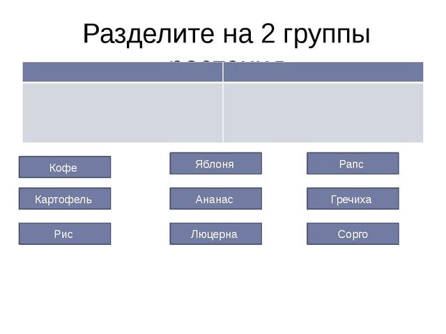 Разделите на 2 группы растения Кофе Гречиха Рапс Ананас Картофель Люцерна Ябл...