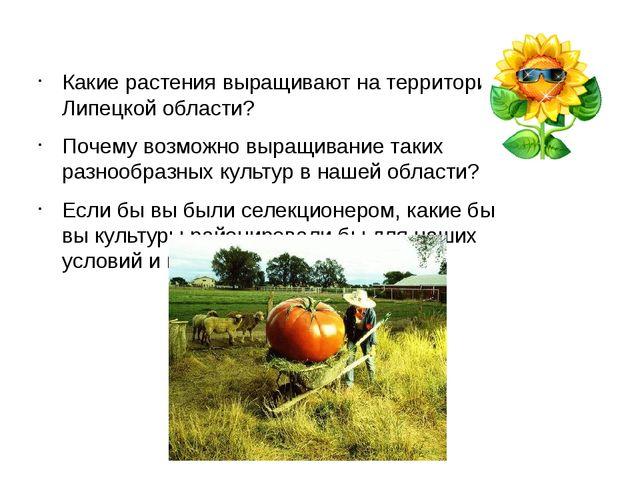 Какие растения выращивают на территории Липецкой области? Почему возможно вы...