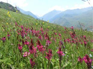 Subalpine und alpine Weiden