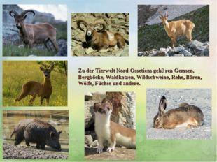 Zu der TierweltNord-Ossetiens gehӧren Gemsen, Bergböcke, Waldkatzen, Wildsch