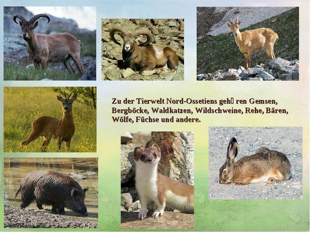 Zu der TierweltNord-Ossetiens gehӧren Gemsen, Bergböcke, Waldkatzen, Wildsch...