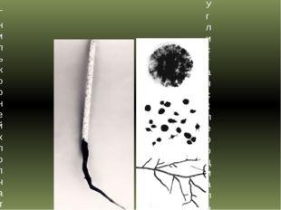 Гниль корней хлопчатника Углистая склероциальная гниль хлопчатника.