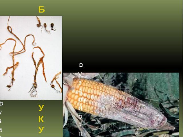 БОЛЕЗНИ КУКУРУЗЫ Фузариоз початков кукурузы Фузариоз всходов кукурузы