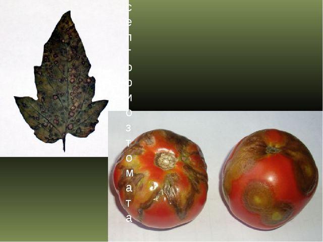 Вирус мозаики табака септориоз томата (белая пятнистость листьев)